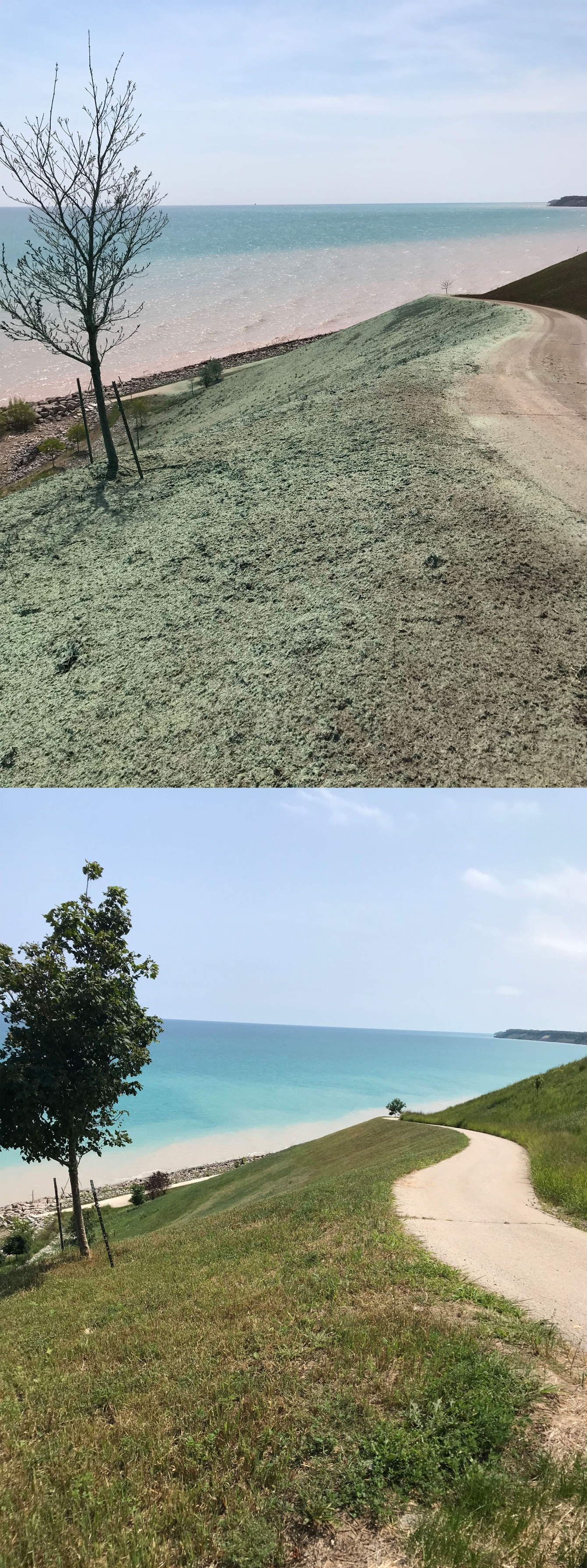 <b> Top: </b>HP-FGM erosion control material is visible shortly after application in May 2018 . <b> Bottom: </b> Full vegetation establishment was seen less than three months later.